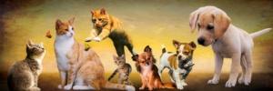 Hayvanlar için CBD yağı aldıktan sonra köpekler ve kediler