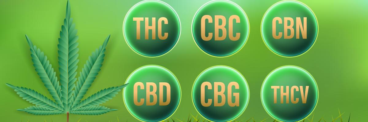 Kannabinoidler - Genel Bakış: CBD, THC, CBC, CBN, CBG, THCV